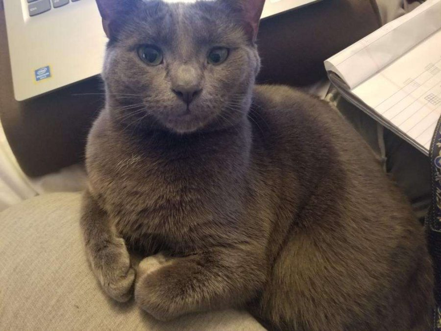 Melvin displaying his sophistication while sitting on top of paperwork that Junior Casey Reinhardt's mom is working on.
