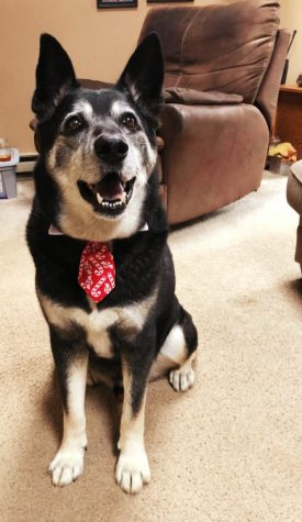 Sven is celebrating the holiday season in style with his festive candy cane tie.